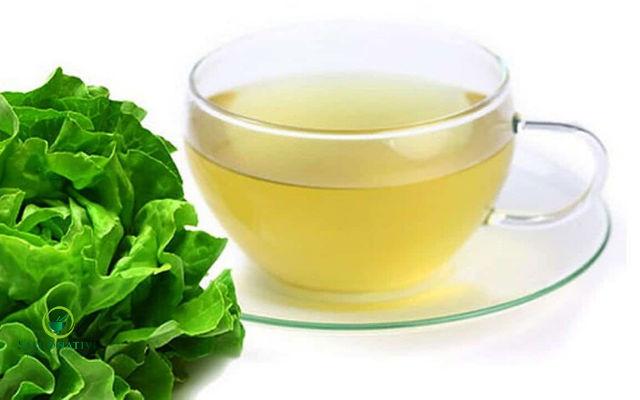 agua con lechuga para la fiebre en adultos