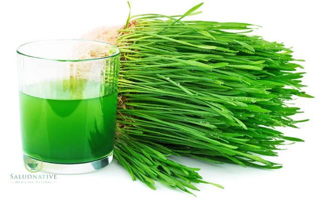zumo de trigo verde para los cálculos renales