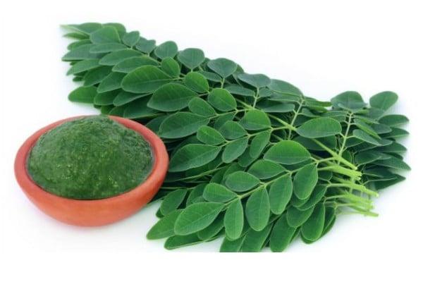 hojas de moringa para eliminar quistes en los ovarios