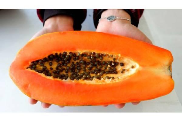 semillas de papaya para eliminar parásitos